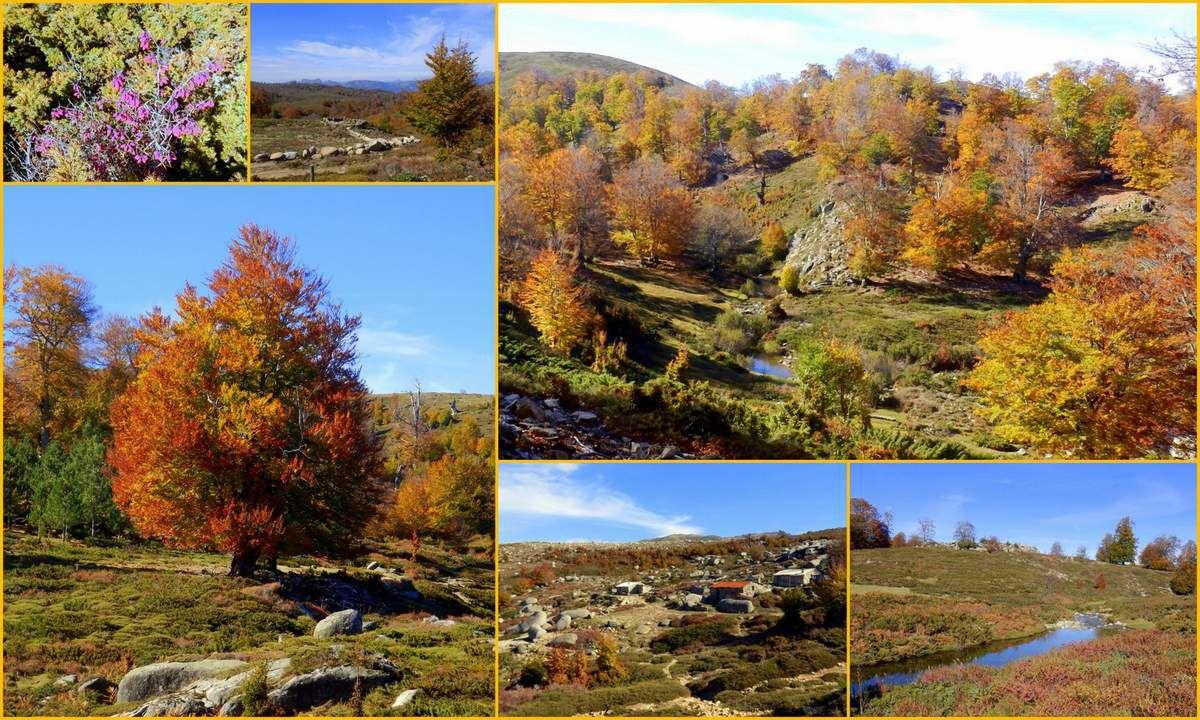 L'automne, sur un plateau !