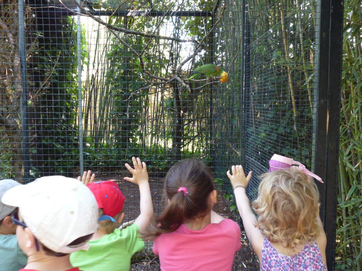 Visite au Parc des oiseaux