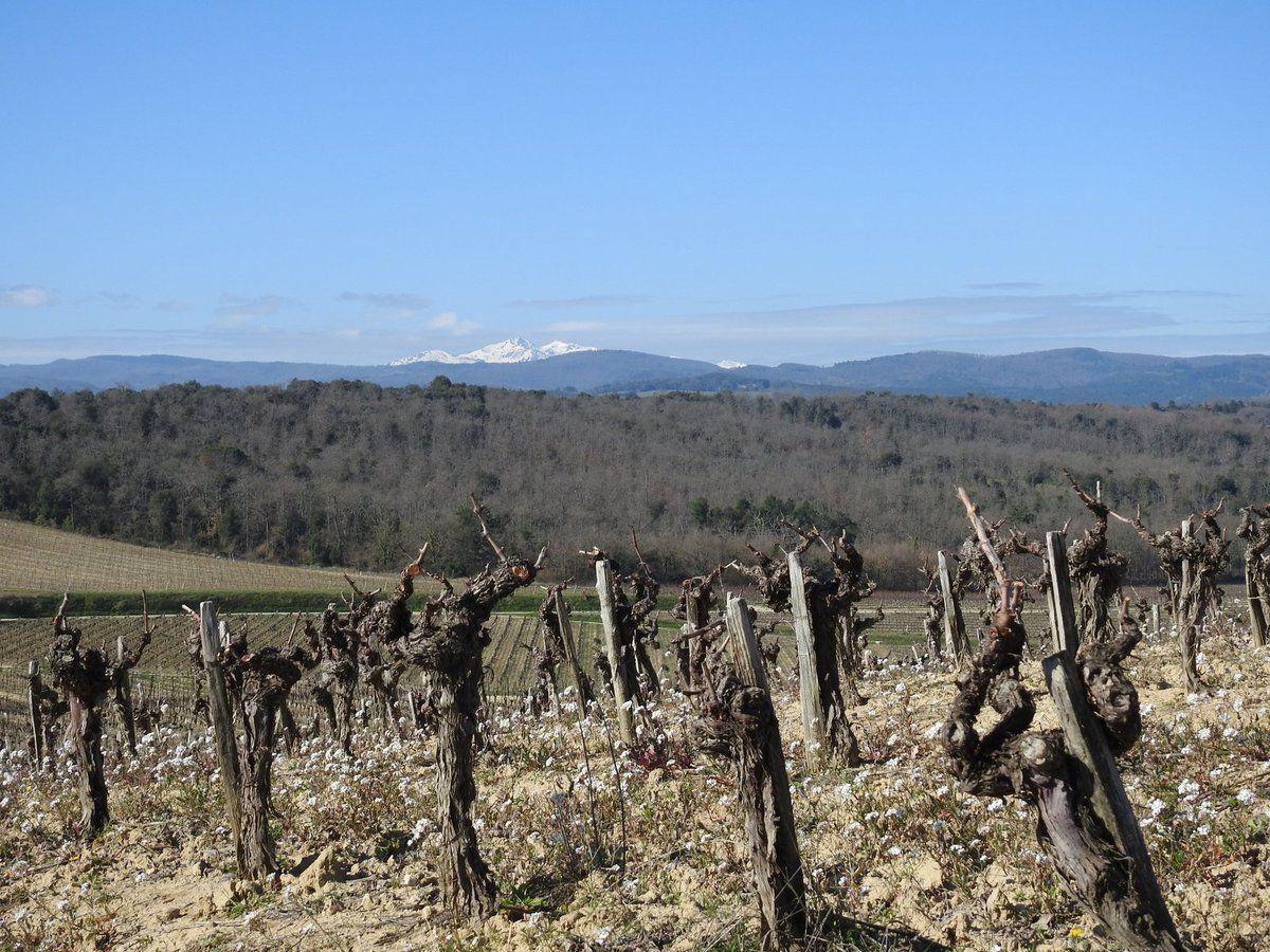 La vigne de Malras au pied des Pyrénées