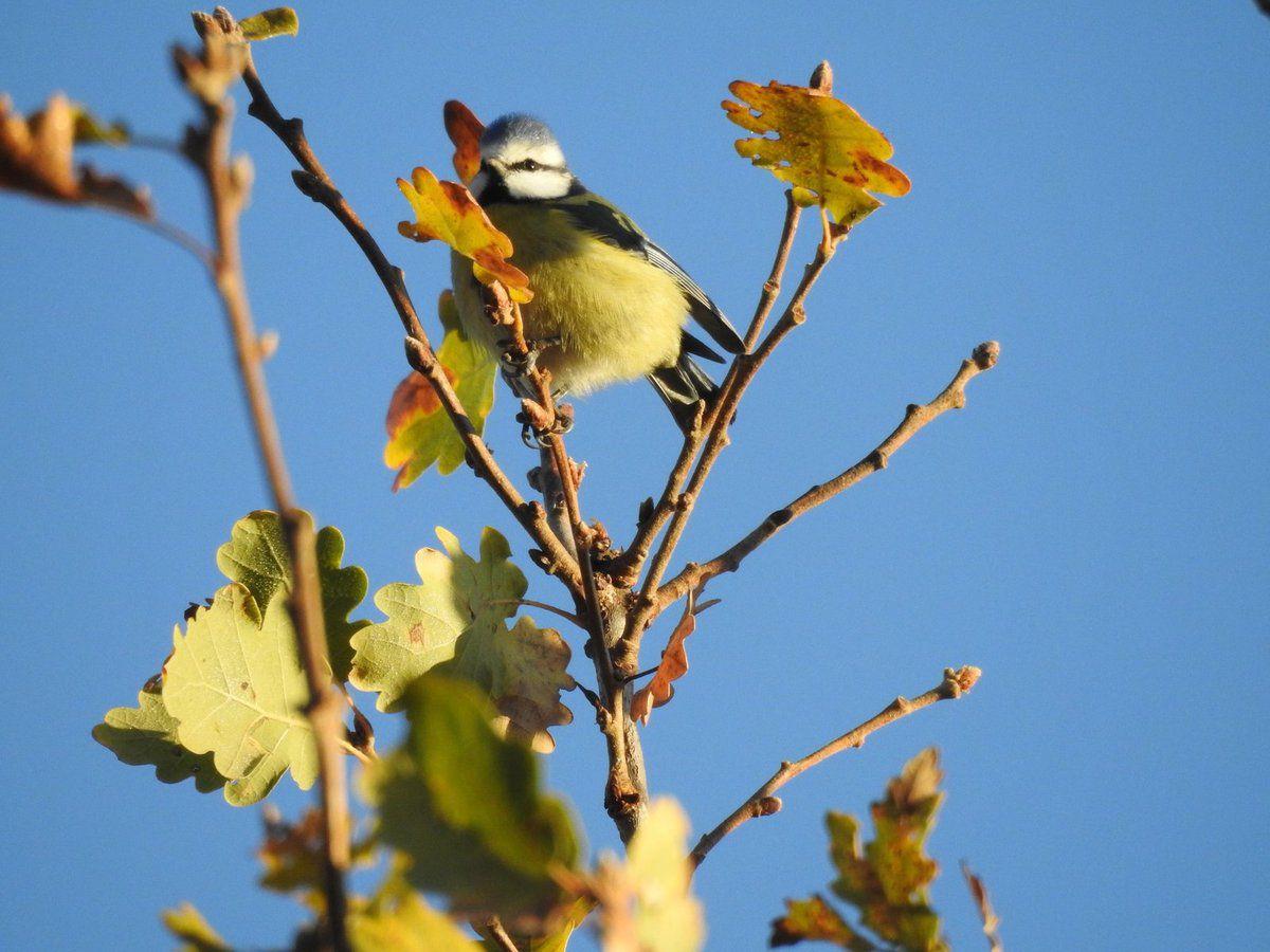 Rencontres ornithologiques du moment à Malras