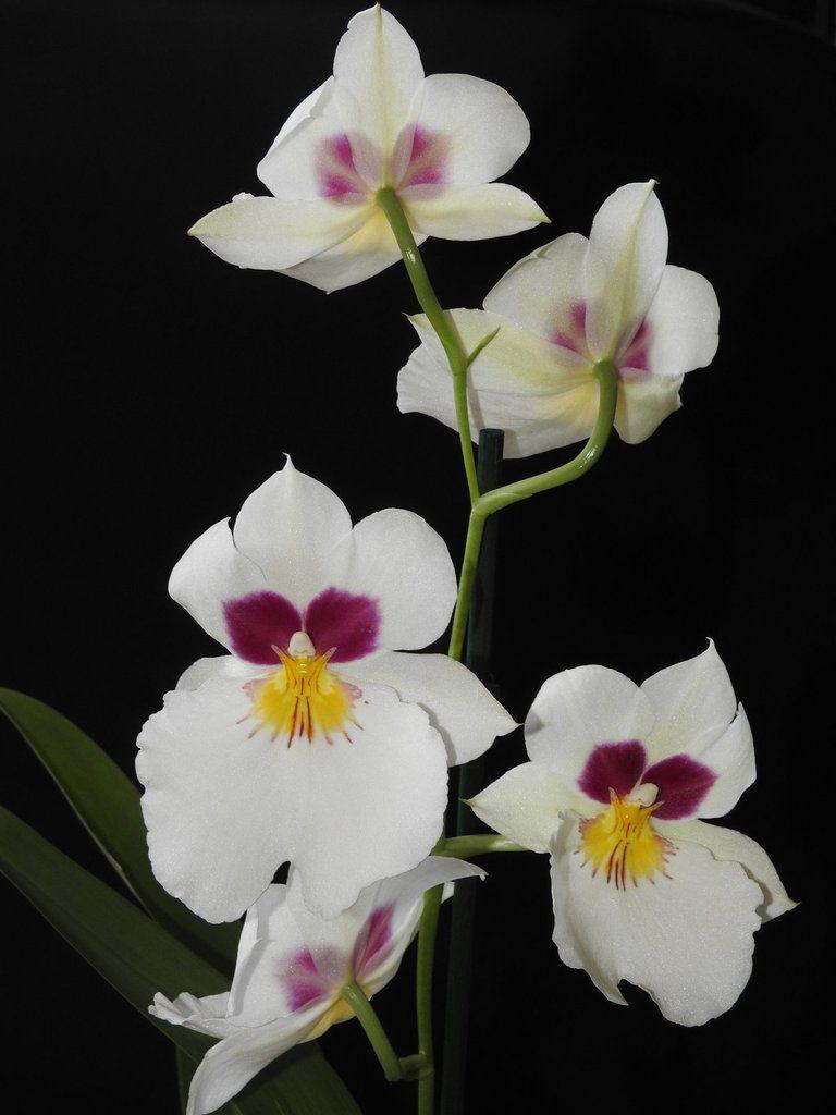 Ma collection d'Orchidées s'agrandit avec toutes ces fleurs !!