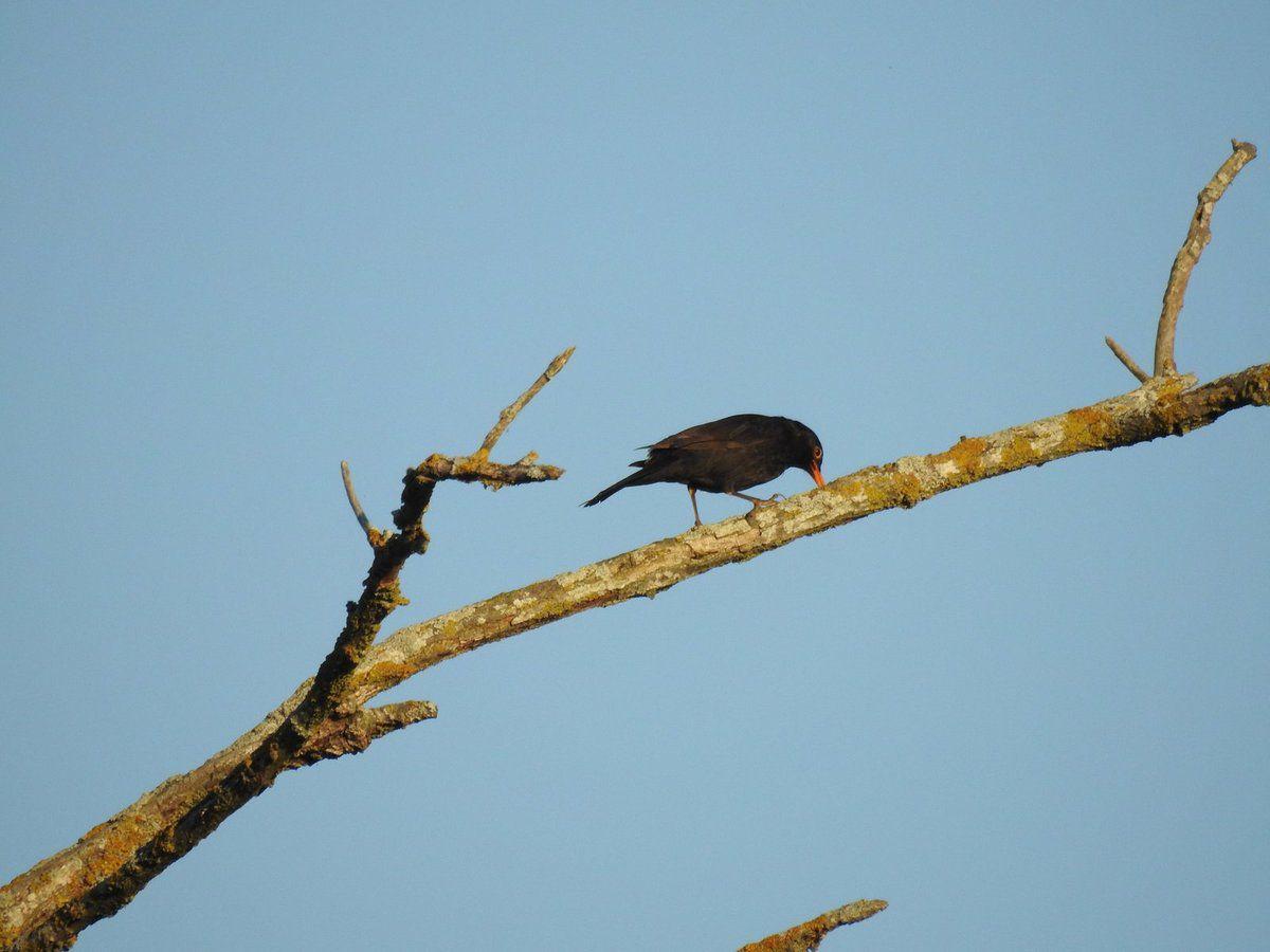 Voici quelques oiseaux rencontrés dernièrement sur le territoire de Malras !!