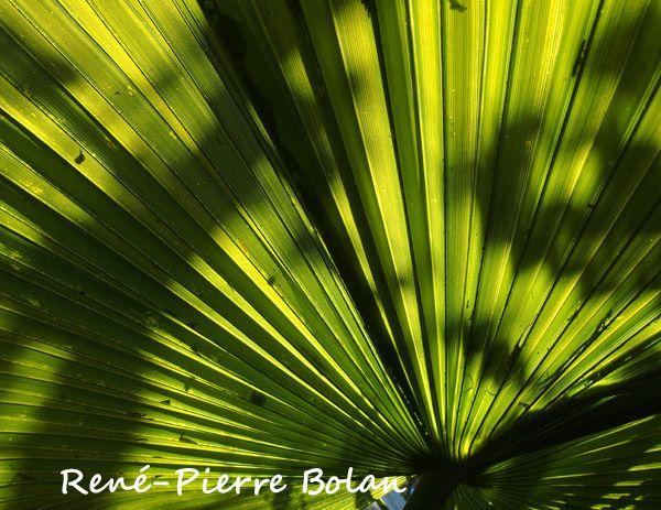 1148 : Farniente sous les palmiers.