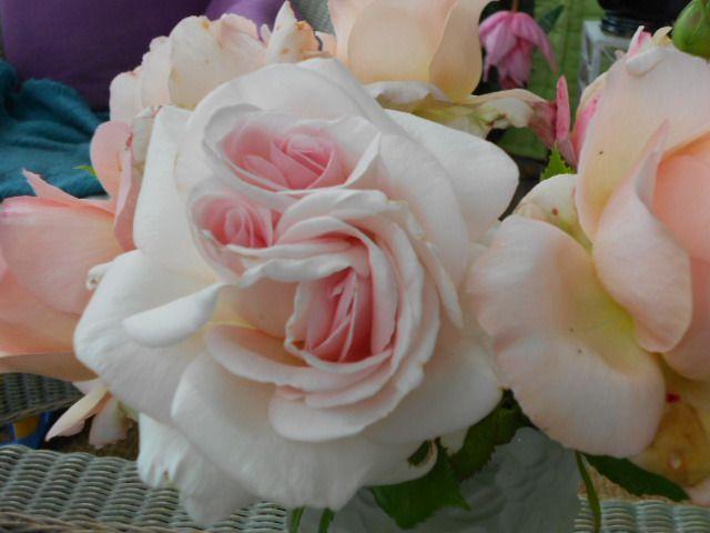 Rose à 3 coeurs.