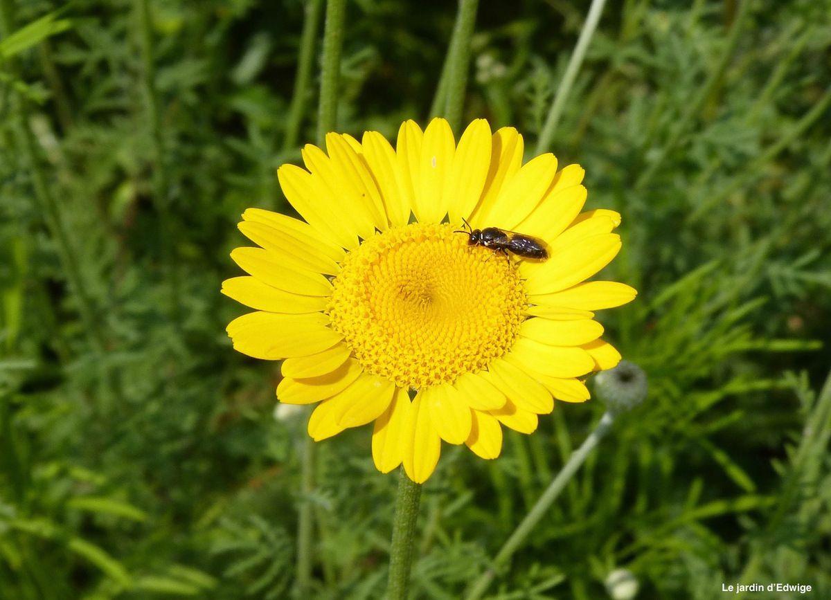 Une fleur et sa visiteuse, l'avez -vous reconnue?