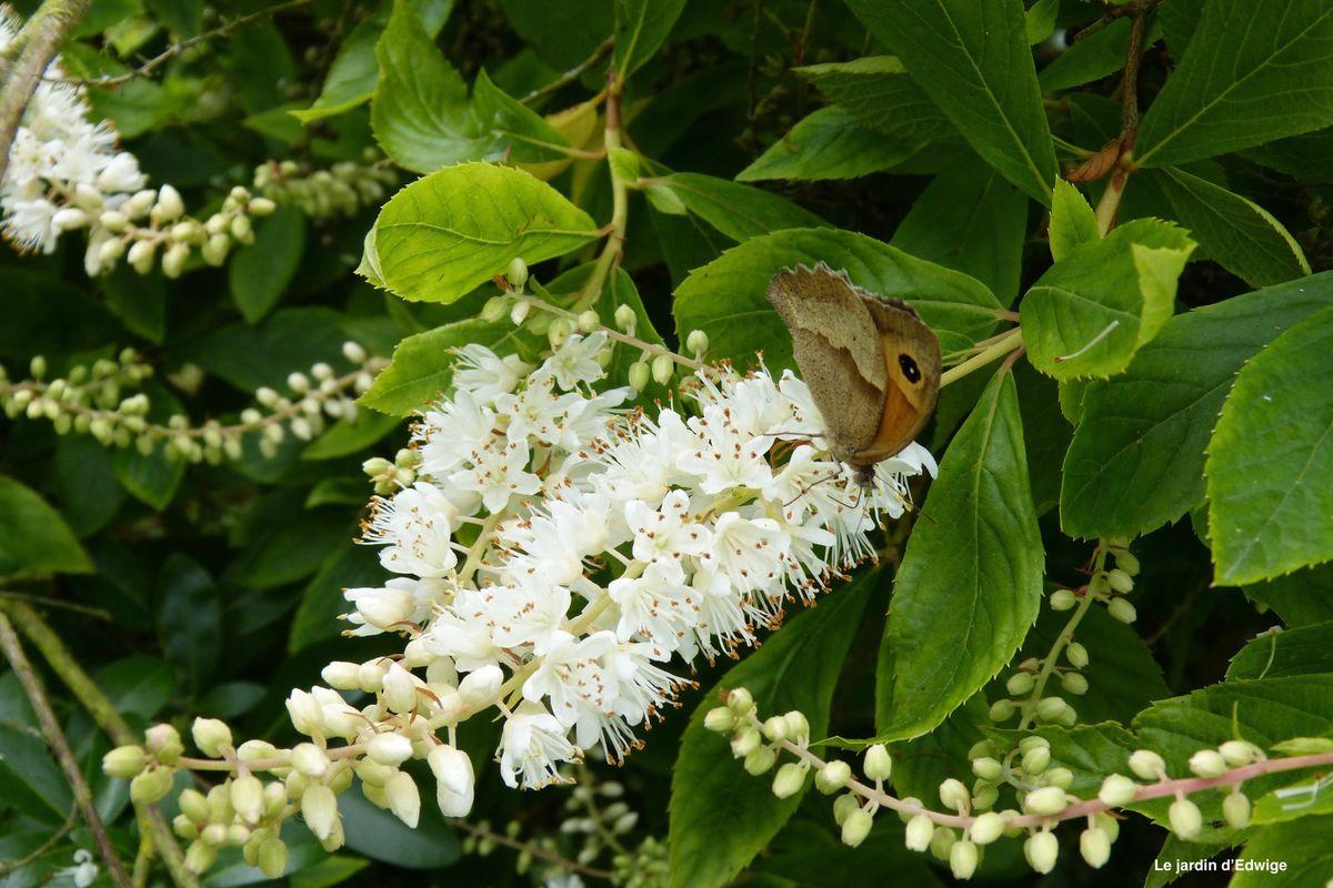 Visite du papillon et autres insectes pollinisateurs.