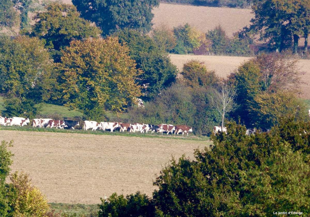 Sortie vers les pâturages un 1er novembre où le temps est superbe.