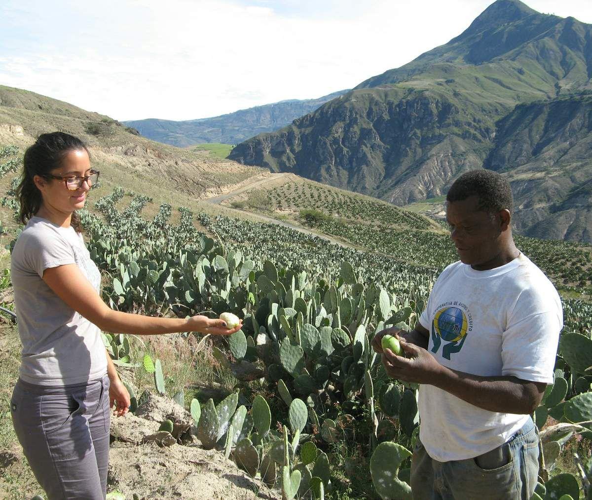 Sur ces collines arides,  la culture des figues de Barbarie a récemment été introduite et offre à la communauté de nouveaux débouchés économiques.