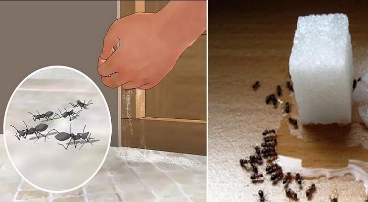 Comment supprimer d finitivement les fourmis sans pesticides nocifs astuces beaut sant - Comment eradiquer les fourmis ...
