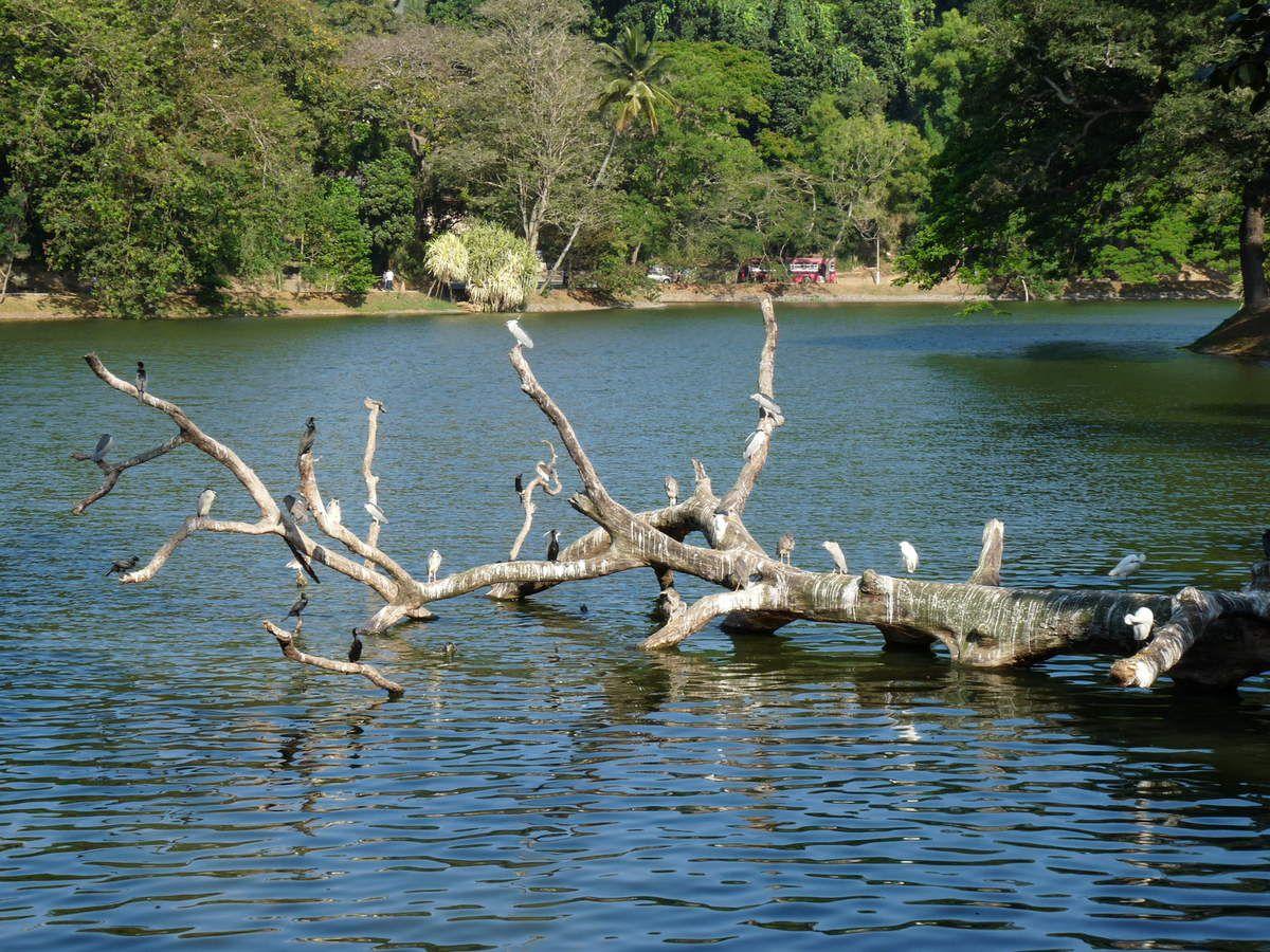 Kandy : Le lac artificiel