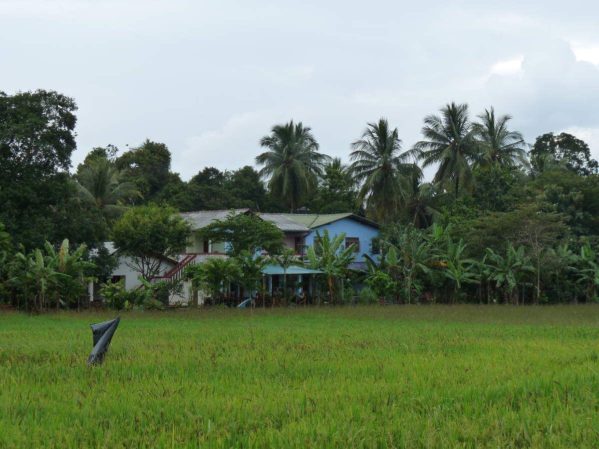 Polonnaruwa : notre pension, le lac et la faune alentour