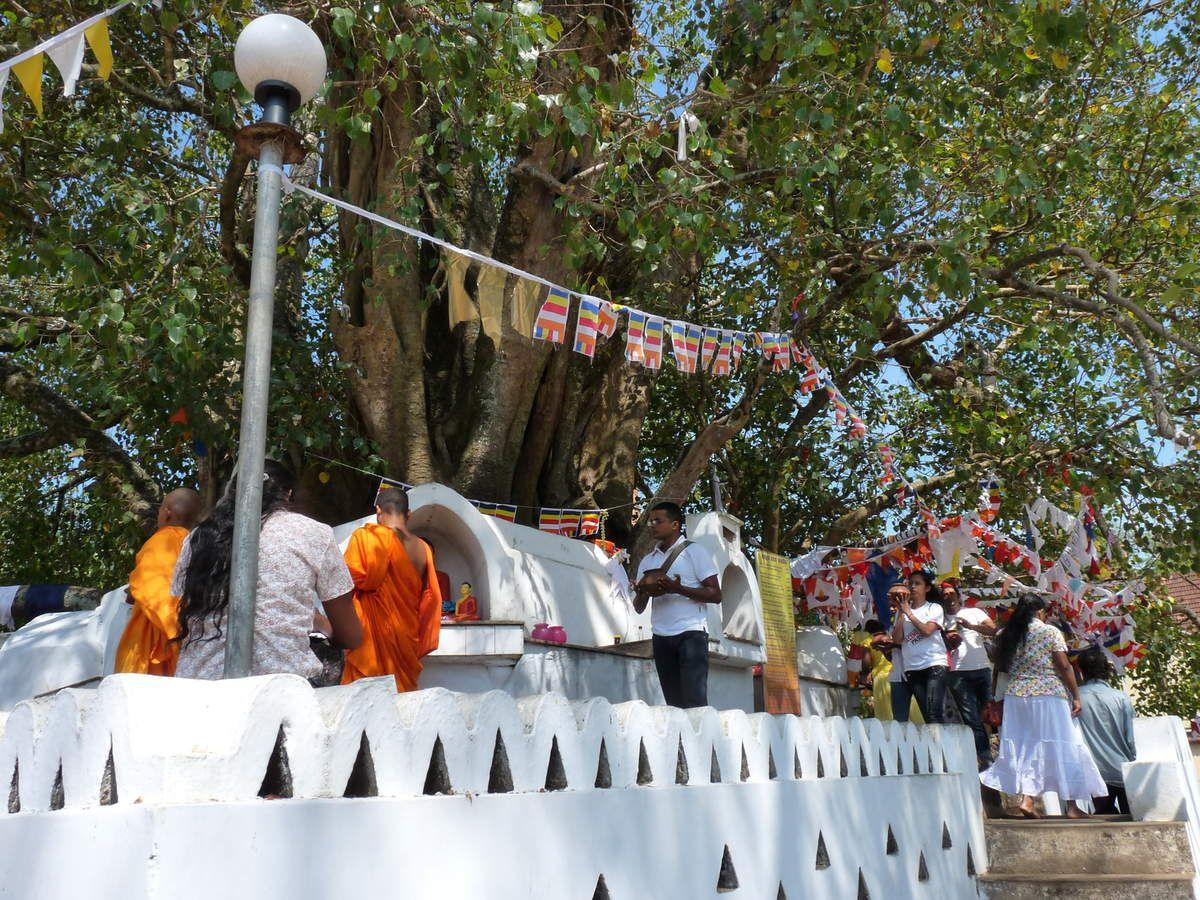 Kandy : Le temple de la dent d'or