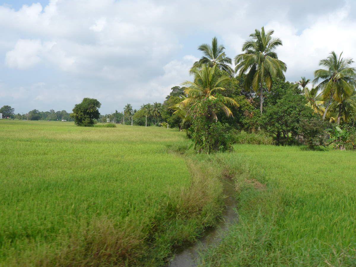 Voyage entre Polonnaruwa et Tricomalee / Trincomalee