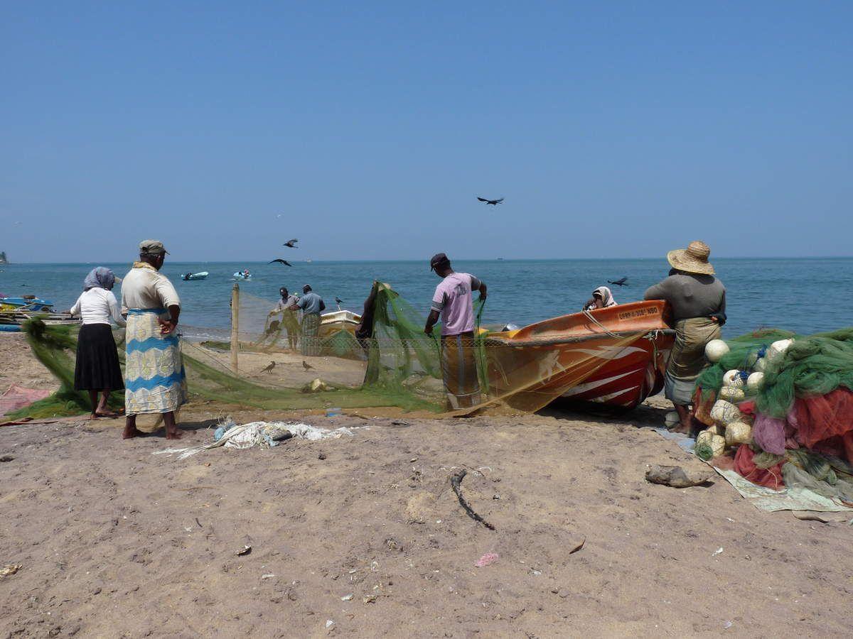 Negombo : ses plages, ses rues et son marché aux poissons