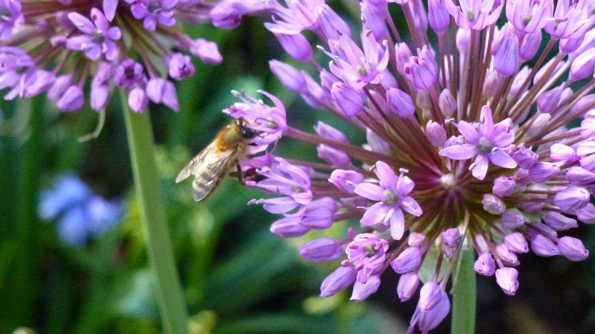 Aktionstag zum Schutz der Bienen