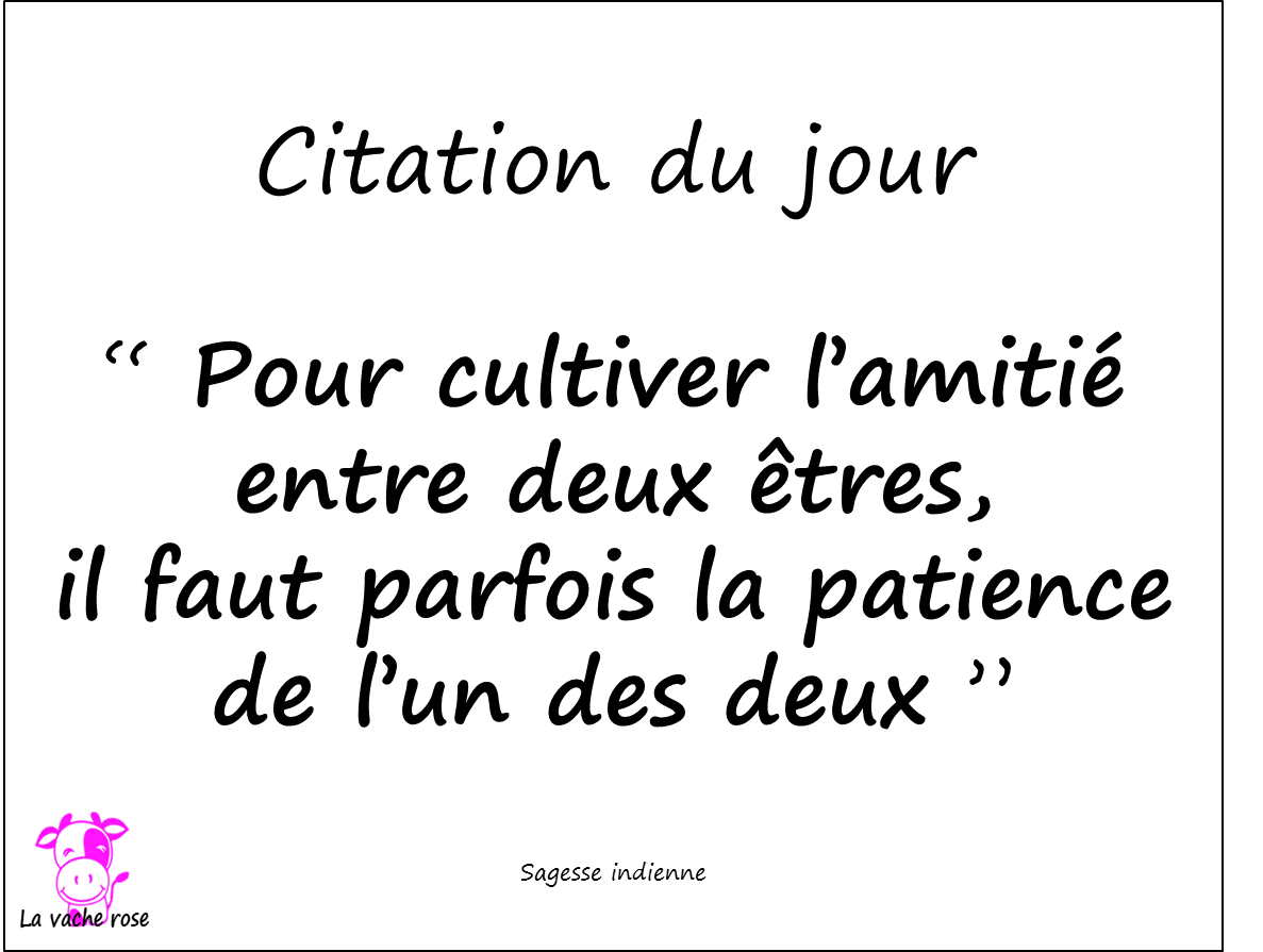 Citation Du Jour 17 Mai 2015 La Vache Rose