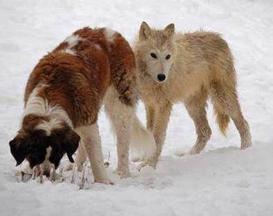 A un chien, si fidèle à l'homme, on peut tout lui apprendre... Animaux pas si bêtes