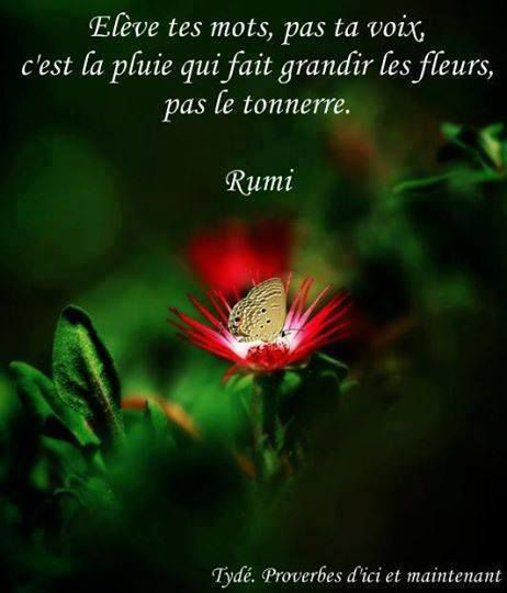 Rumi - 10 Citations