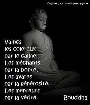 Bouddha 38 Citations La Vache Rose