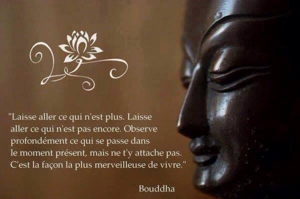 Bien connu Bouddha - 38 citations - La vache rose JX23