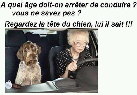 Humour en 20 images la vache rose - Photo de vache drole ...