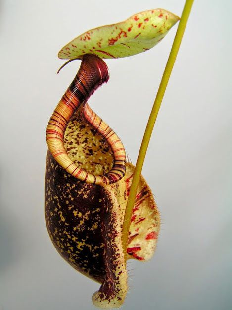 CAN A PLANT BE ENDOWED WITH INTELLIGENCE ?