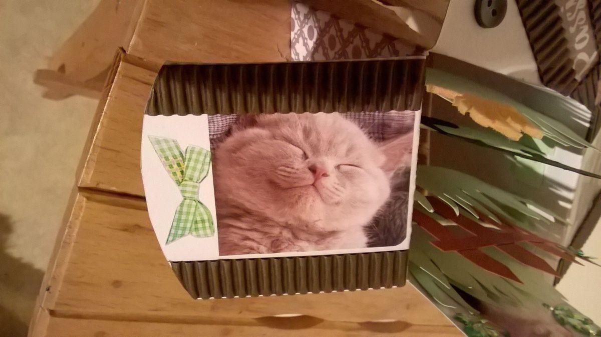 Carte pop up sur le thème des chats. Et alors, elle est comment?