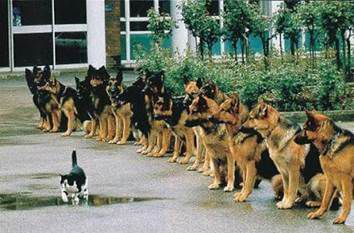 Anything is possible with dogs...