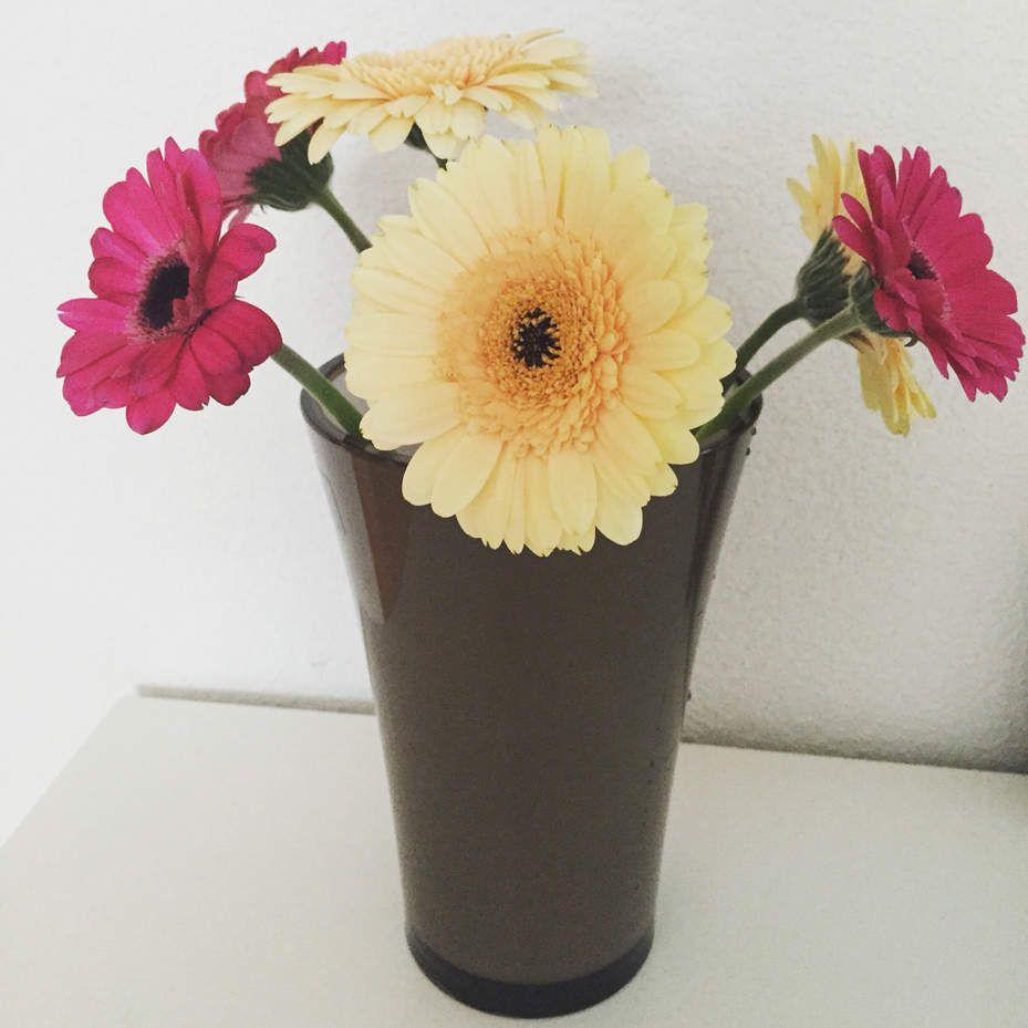 💕Bonne journée 💕 #happyday #polyscias #coeur #love #plante #plant #vert #green #soho #fleuriste #beautiful #amazing