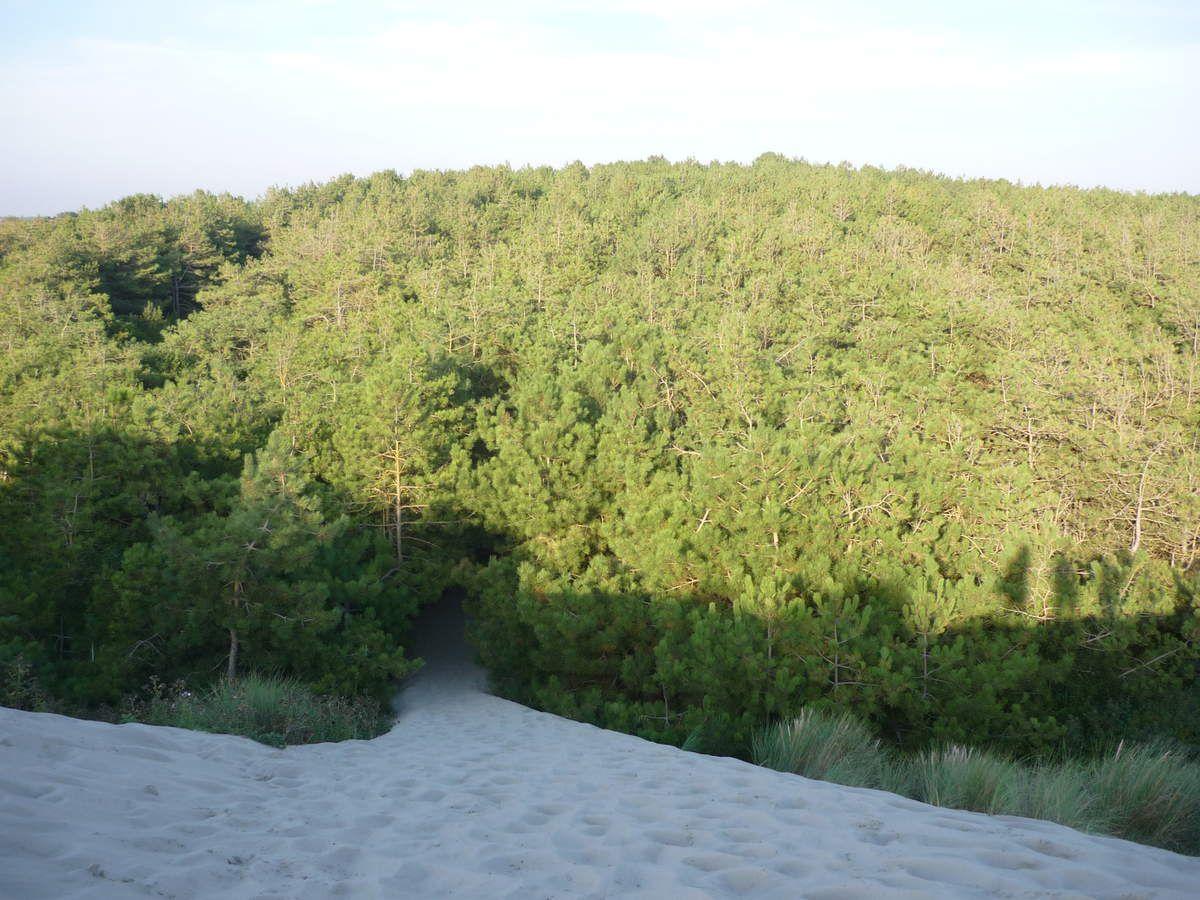 Le parc du Marquenterre - Baie de Somme