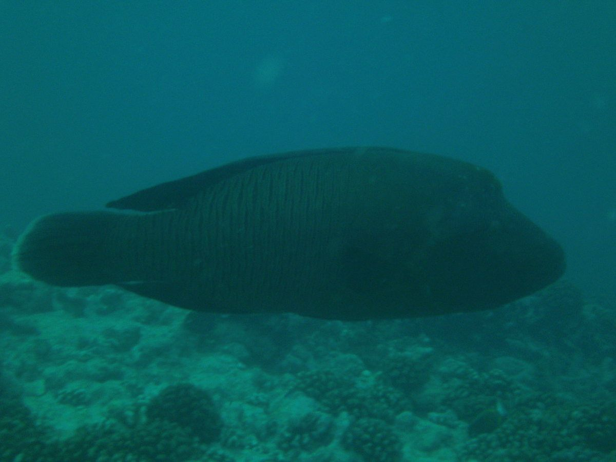 Plongées à Rangiroa - Tuamotu
