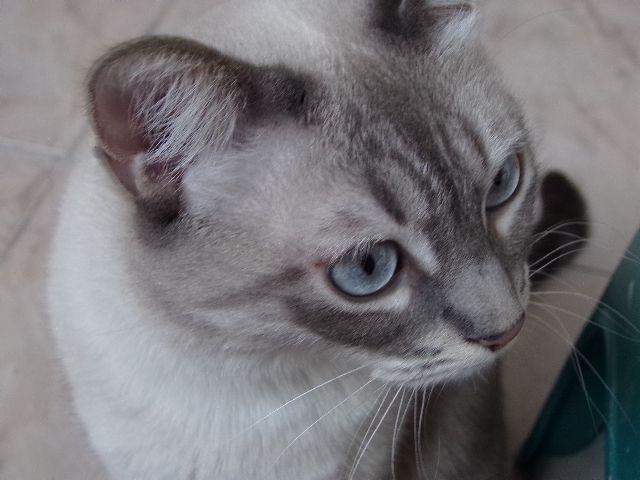 Miaou 2