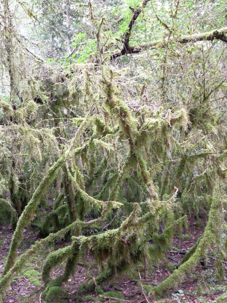 Le fond des combes reçoit moins de lumière. L'humidité y est permanente. Les mousses et les fougères aiment ces conditions.