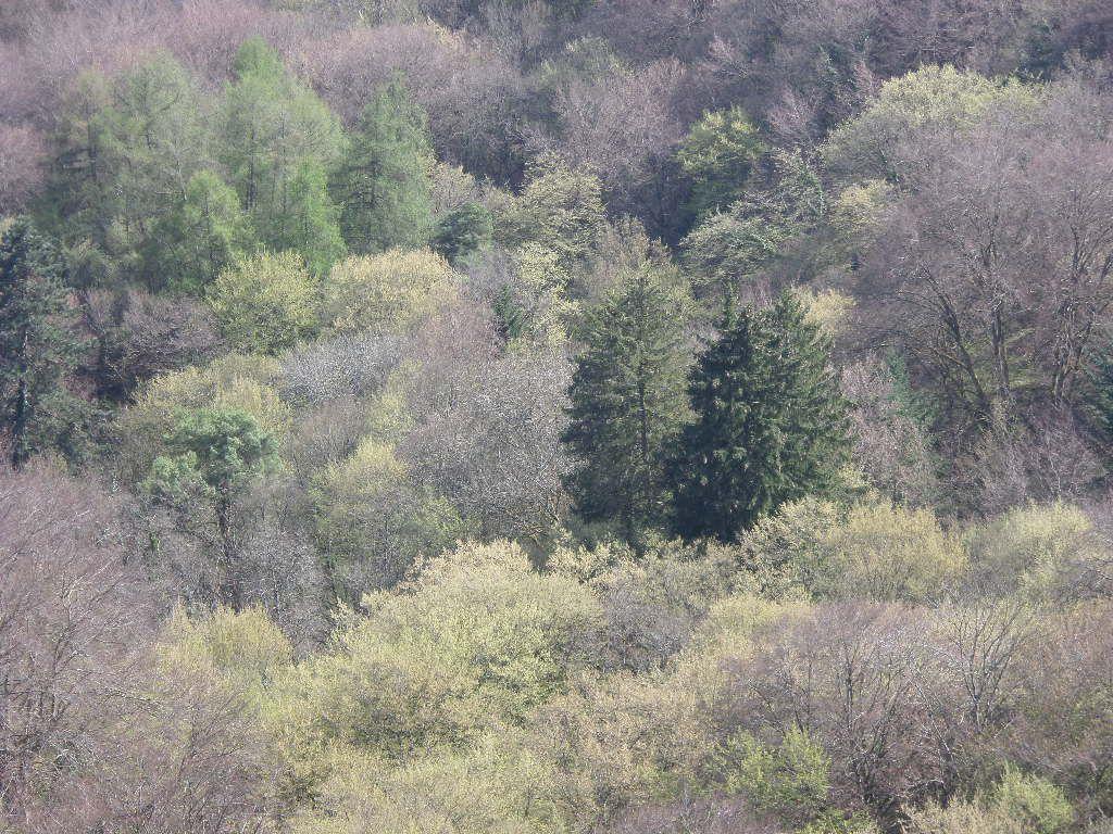 couleurs de nos forêts, au fil des saisons
