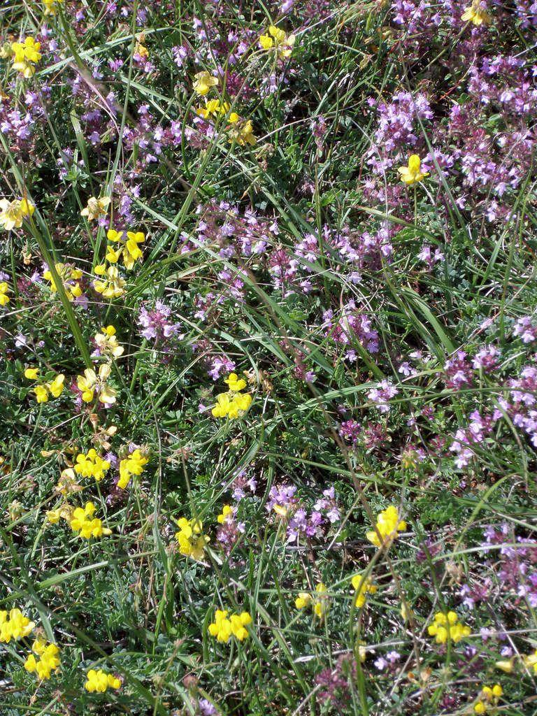 Les pelouses calcaires (source: cen)