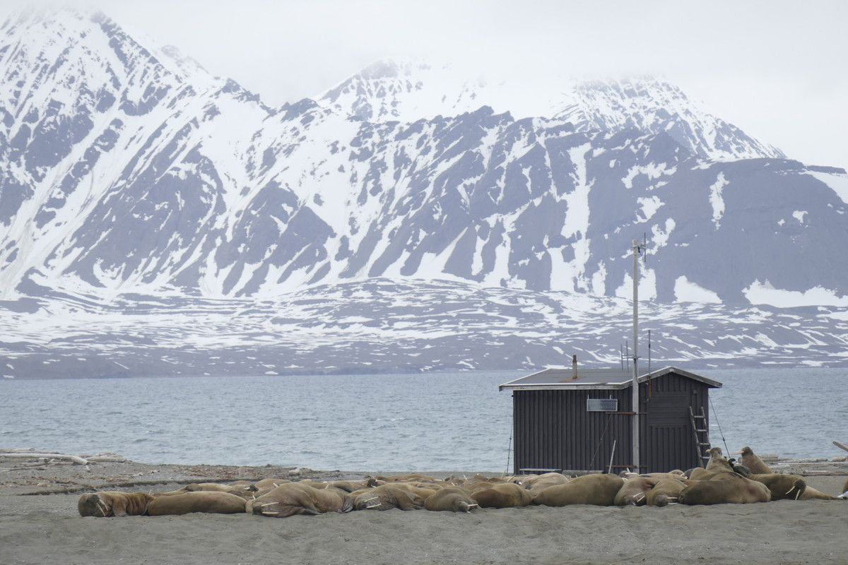 Back into Svalbard