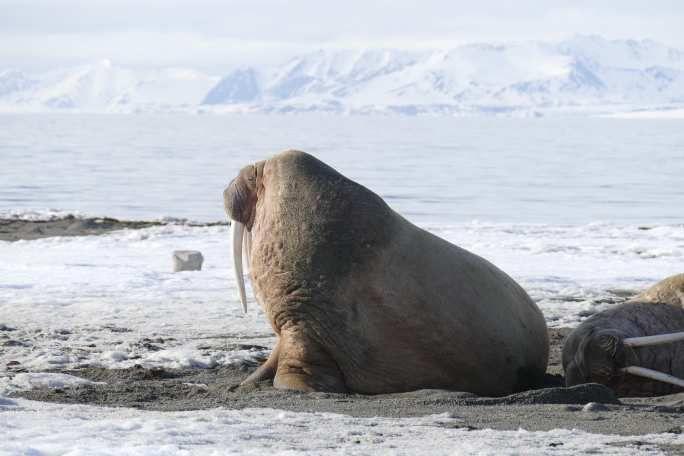 Galerie Svalbard #02