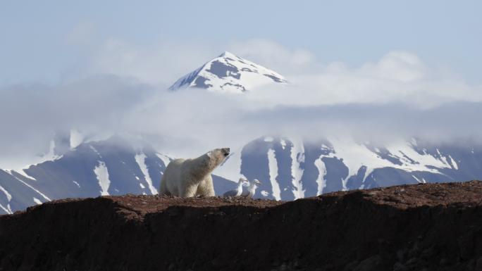 Galerie Svalbard #16