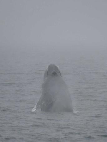 I love whales, I love every kind of whale !