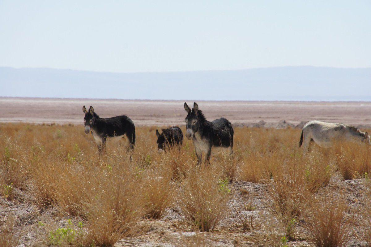 en plein Salar d'Atacama, décicace pour Apple