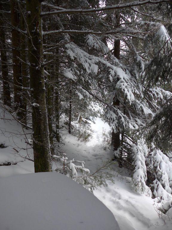 Randonnée au Schneeberg.