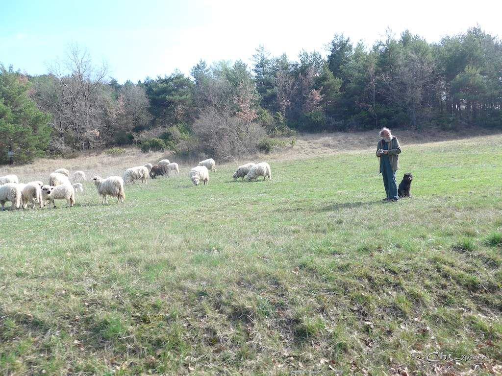 Le calme de la vie pastorale.