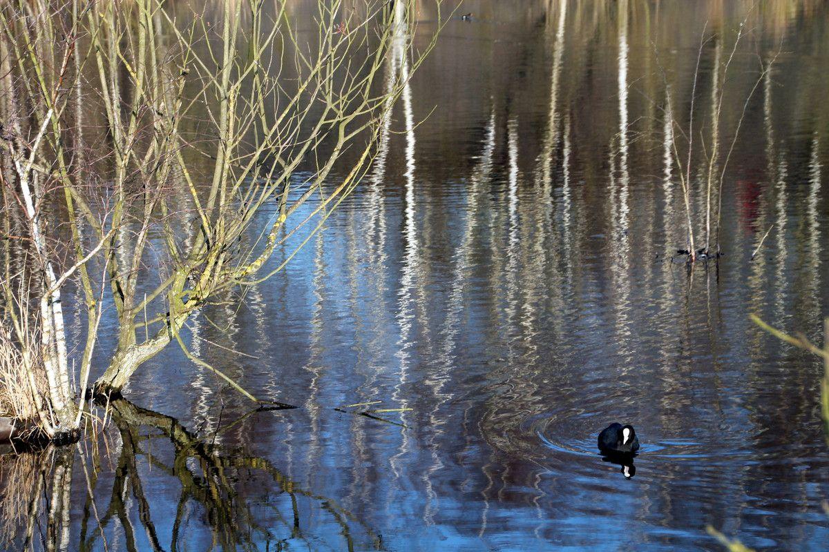 Le potjevleesch de Pierrot - Région Nord (9) le lac de Rieulay
