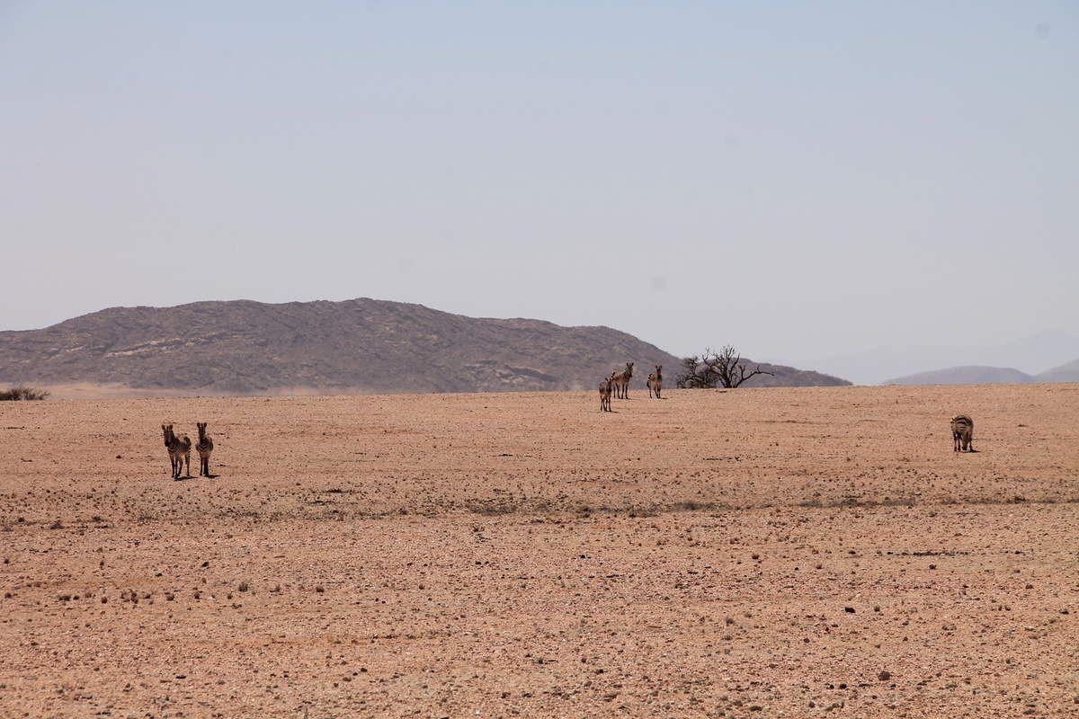Braai le barbecue namibien - Namibie (2) Paysages