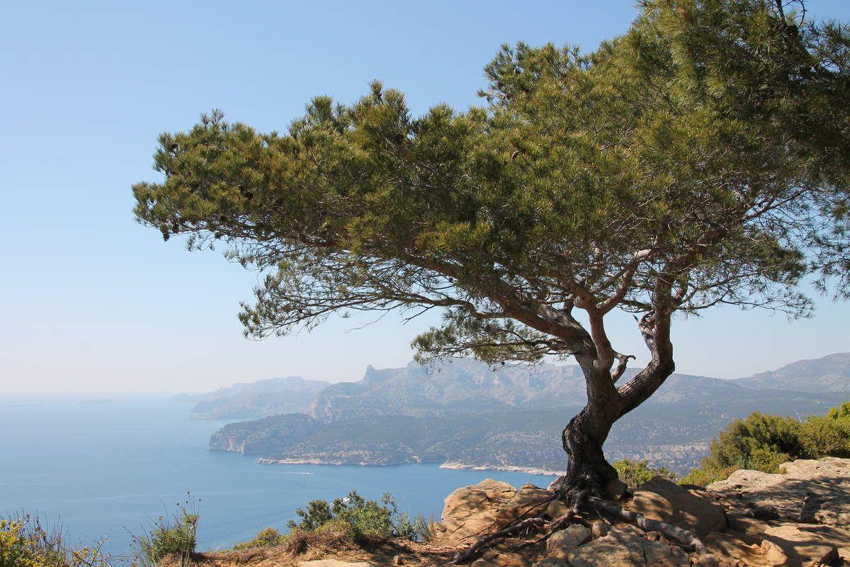 Lotte et coquillages sauce rouille crémeuse - Balade aux calanques de Marseille
