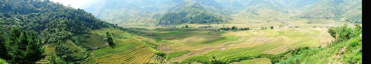 Quelques vues des riziéres ! un spectacle magnifique .