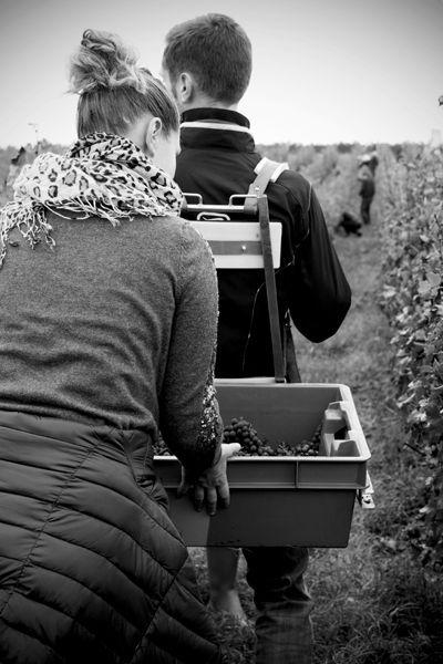 Le monde de la vigne : Chateau Loudenne