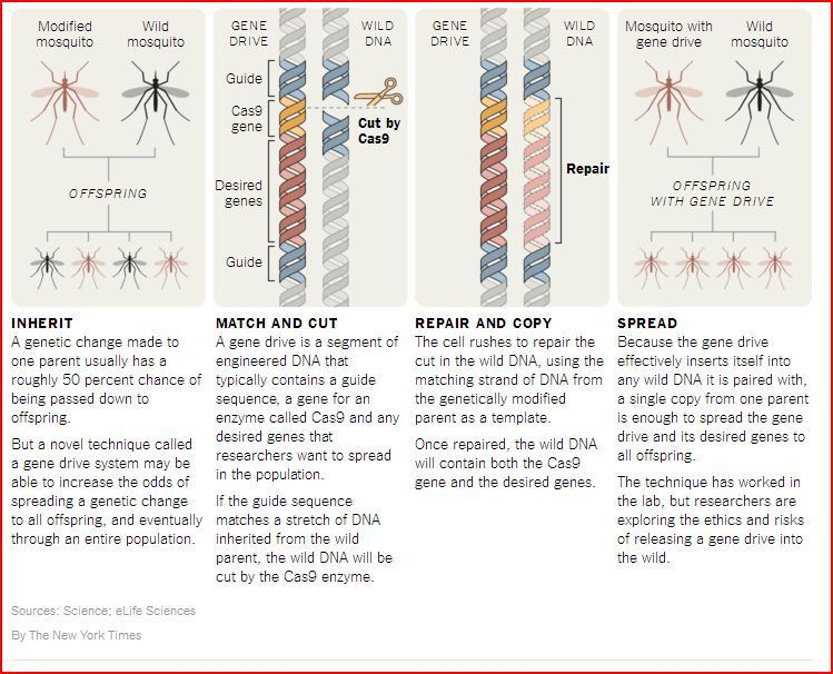 http://www.nytimes.com/2015/12/22/science/gene-drives-offer-new-hope-against-diseases-and-crop-pests.html