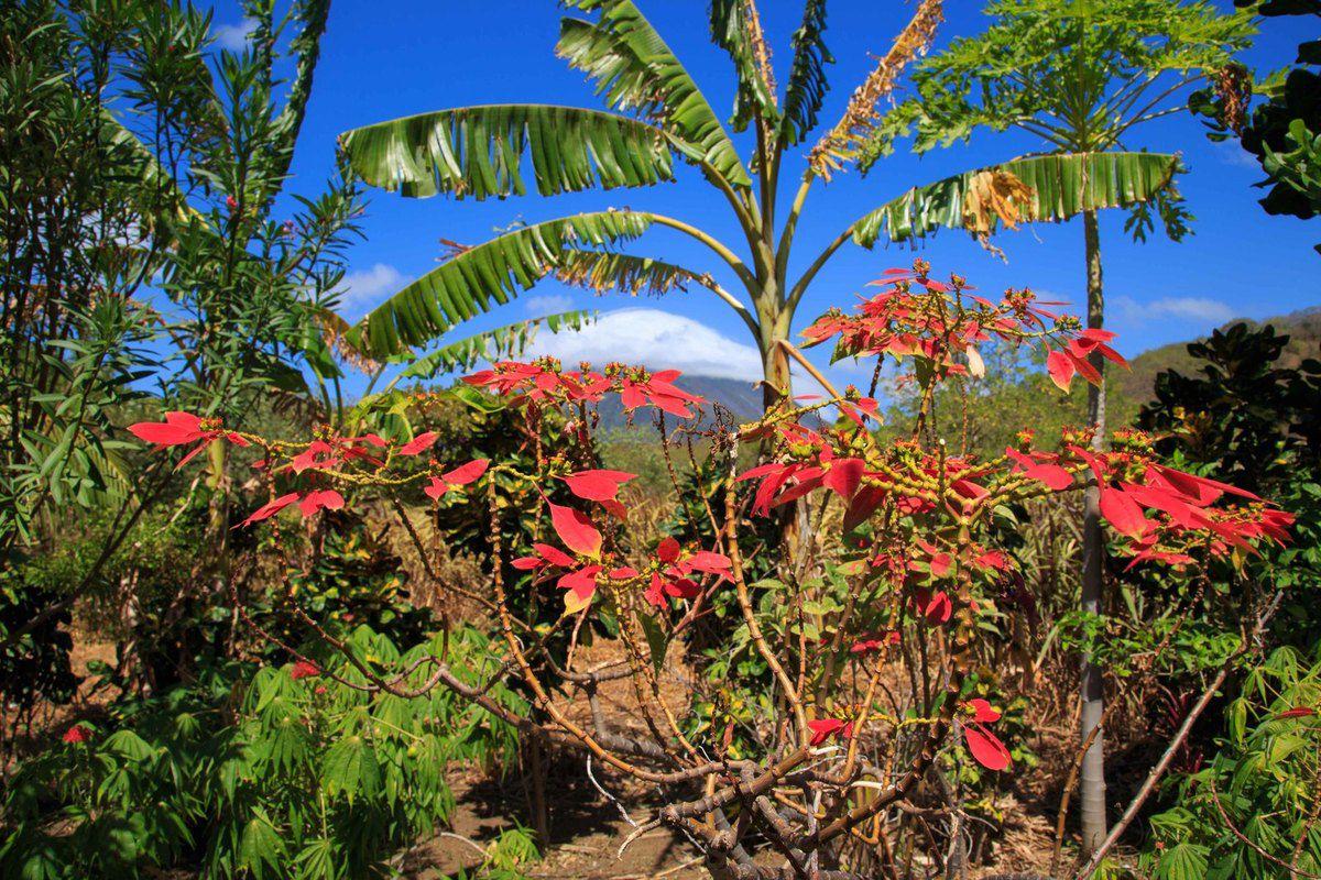 Charco Verde avec le volcan Madera en fond