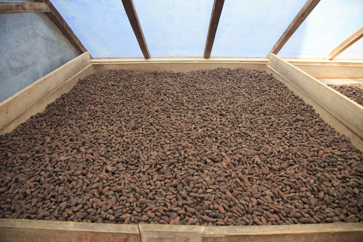 Fabrication artisanale de Cacao